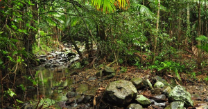 cropped-rainforest.png