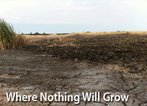 soil nothing will grow