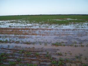 soil waterlogged