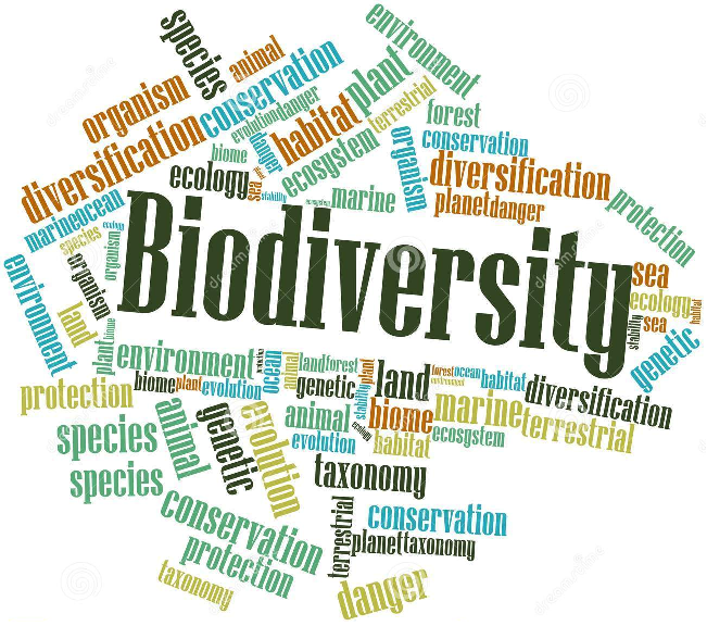the importance of biodiversity essay Importance of responsibility someone's irresponsibility can be not only irritating when a person does not cope or does not want to cope with the duties, but i hope you liked this responsibility essay if you look for more information, visit our website on our blog, you can find essays on responsibility and.