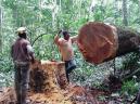 timberworkers